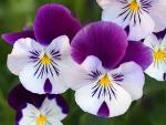 Clic en la imagen para ver su versión completa.  Nombre: flores exóticas.jpg Visitas: 235315 Tamaño: 52.7 KB ID: 3684