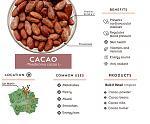 brochure-cacao.jpg