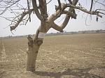 blogs/abiliosoto/attachments/4402-venta-de-terreno-agricola-de-12-5-has-chincha-cimg2780.jpg