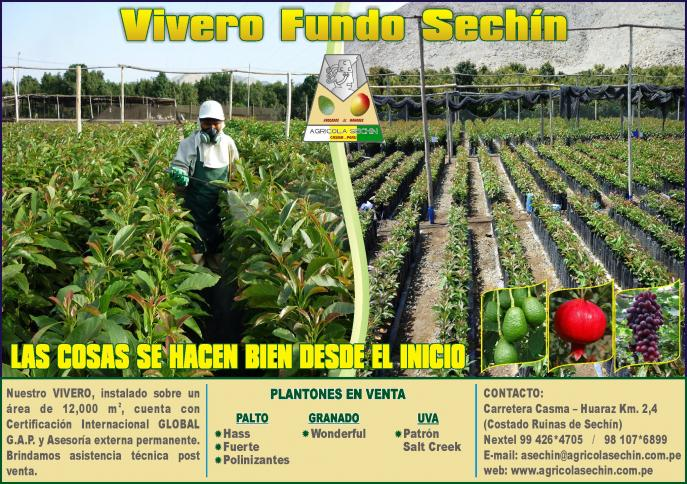 Blogs agricola sechin sac attachments 3175 vivero norte for Viveros de arboles frutales en concepcion