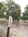 blogs/agroindustrias-verdeflor-sac/attachments/18157-se-alquila-terreno-amplio-de-10milm2-carretera-tambogrande-cruceta-piura-agro-y-o-comercial-img-20181103-wa0003.jpg