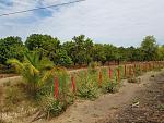 blogs/agroindustrias-verdeflor-sac/attachments/18158-se-alquila-terreno-amplio-de-10milm2-carretera-tambogrande-cruceta-piura-agro-y-o-comercial-img-20181103-wa0006.jpg