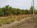 blogs/agroindustrias-verdeflor-sac/attachments/18159-se-alquila-terreno-amplio-de-10milm2-carretera-tambogrande-cruceta-piura-agro-y-o-comercial-img-20181103-wa0007.jpg