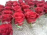 blogs/florlicol/attachments/21475-haga-ud-mismo-a-flores-y-follajes-preservados-de-exportacion-asesoria-jorge-rivera-photo4-2-.jpg