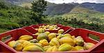 blogs/meylin-jara-silva/attachments/19553-vendo-frutas-mayor-deshidratados-y-mermeladas-papayita-nativa.jpg