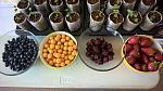 blogs/organics-andina/attachments/12916-organics-andina-nueva-tecnologia-sistema-ellepot-viveros-y-semilleros-ellepot-berries-3.jpg
