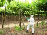 Este grupo congrega a todos los profesionales y técnicos del Perú relacionados con las aplicaciones de productos fitosanitarios y reguladores de crecimiento en diferentes cultivos, uva...