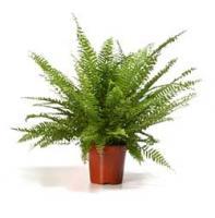 Produccion,comercializacion de plantas ornamentales de exterior e interior.  Diseño y mantenimiento de jardines y areas verdes.  Sistema de riego