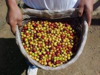 Profesionales, productores, especialistas, catadores ligados a la producción del mejor café del mundo